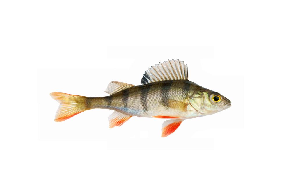Liman Fisch-Restaurant Rotbarsch