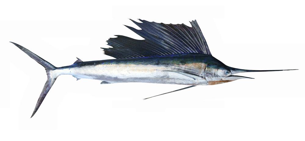 Liman Fisch-Restaurant Schwertfisch